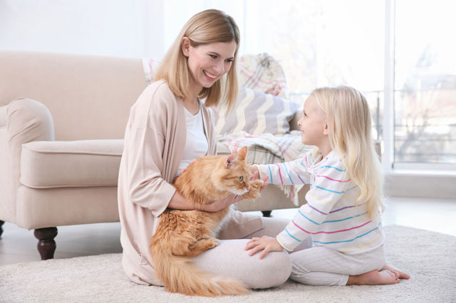 spotless dry carpet cleaning - family friendly